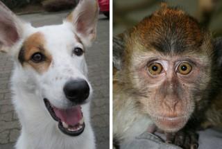 개와 일부 원숭이, 여우 등 포유류의 눈에서 자기장을 감지할 수 있는 단백질이 있다는 사실이 확인됐다. - 막스플랑크연구소 제공